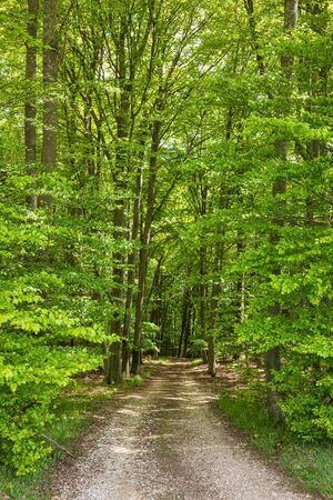 Gravel country road thru green forest  in rural Bavaria, Germany 免版税图像