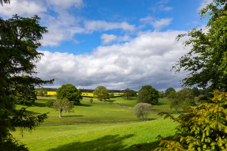 Summer rural landscape with sheep grazing on green field in Southern England, UK Standard-Bild
