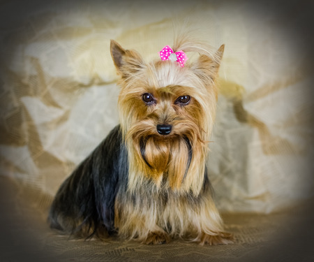 Beautiful small dog Stock Photo