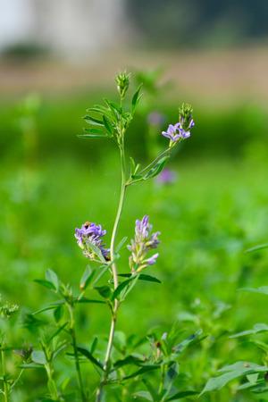 Wild flower in green background