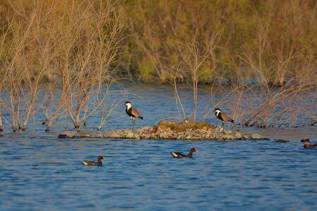 Birds in green valley lake, Jeddah - Saudi arabia