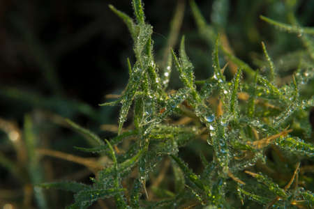 Dewdrops on grass, macro shot
