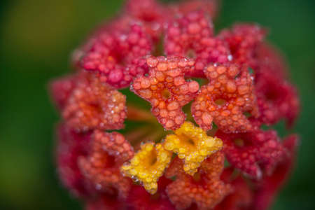 Gorgeous macro image dewdrops on flower