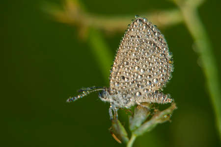 Little butterfly with dewdrops