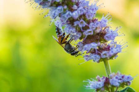 Honeybee on wild flower, Macro photography Banco de Imagens