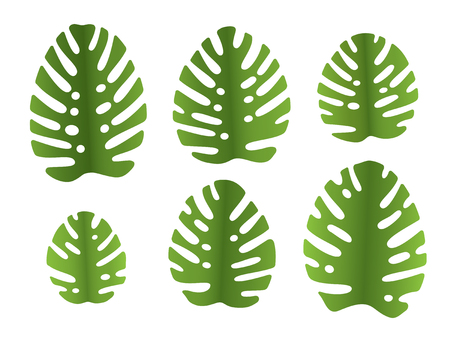 6 different   leaves of monstera plant Stock Vector - 7962254