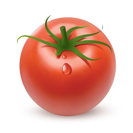 vegetable cook: Bright red tomato, created using gradient meshes