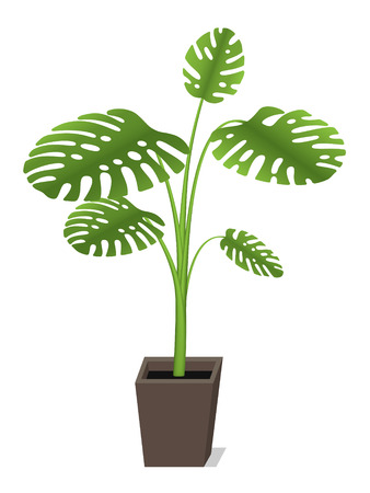 Big plant for house and office decoration