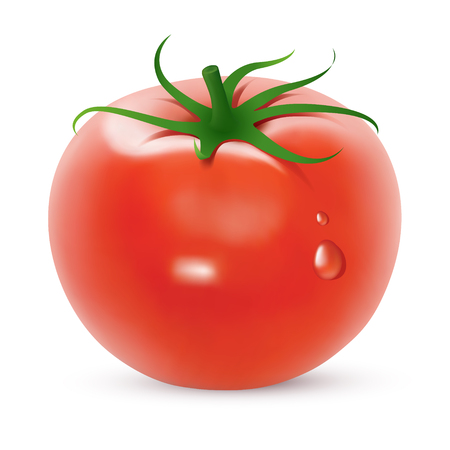 Tomato. Created using gradient meshes.