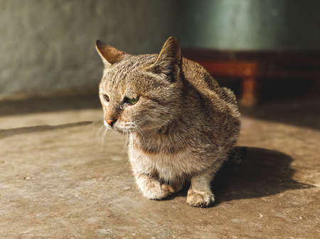 Cat in tears becaus of old age and maybe hunger