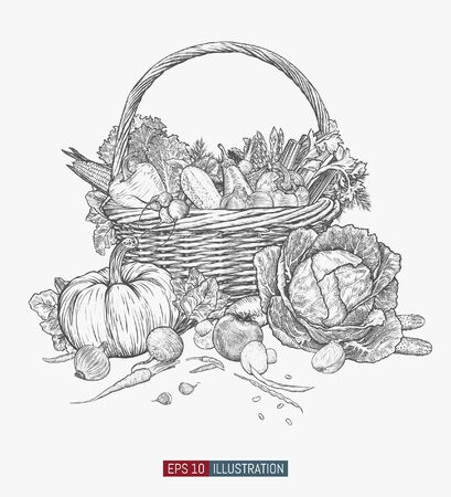 Hand drawn wicker basket. Template for your design works. Engraved style vector illustration. Ilustracja