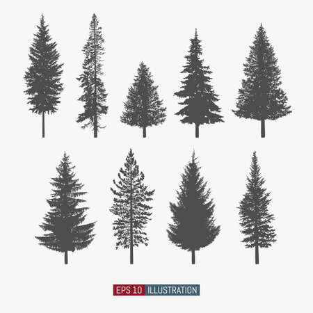 Coniferous tree isolated silhouettes set. Pine tree and fir tree flat icons. Elements for your design works. Vector illustration. Vetores