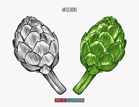 Hand drawn artichoke. Template for your design works. Engraved style vector illustration.