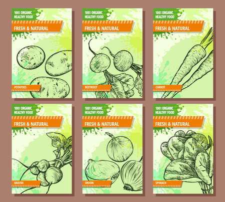 Vegetables banners set. Hand drawn fresh and natural vegetables. Potato, beetroot, carrot, radish, onion, spinach. Template for your design works. Vector illustration.