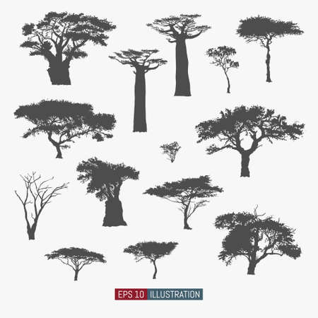 African tree isolated silhouettes set. Baobab, acacia and other. Elements for your design works. Vector illustration.  イラスト・ベクター素材