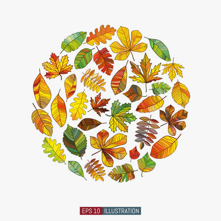 Colored leaves set. Beech, chestnut, elm, maple, oak, rowan and other leaves. Vector illustration. Ilustração