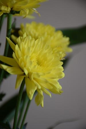 folwer: Yellow folwer