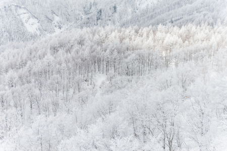 Winter landscape in the Mount Zao that located on the Yamagata-Miyagi prefectural,Japan Stock Photo