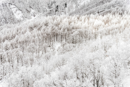 pinaceae: Winter landscape in the Mount Zao that located on the Yamagata-Miyagi prefectural,Japan Stock Photo