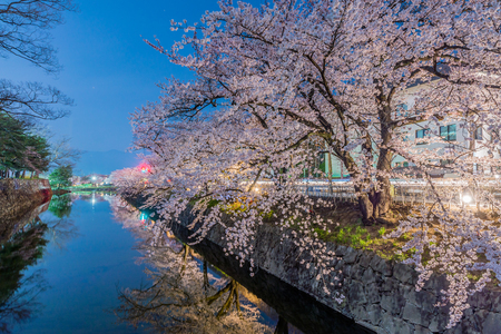 Cherry Blossoms at night in Matsumoto,Japan