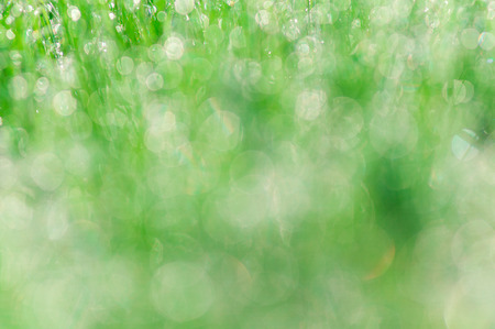 Early morning dew on green grass Stock Photo