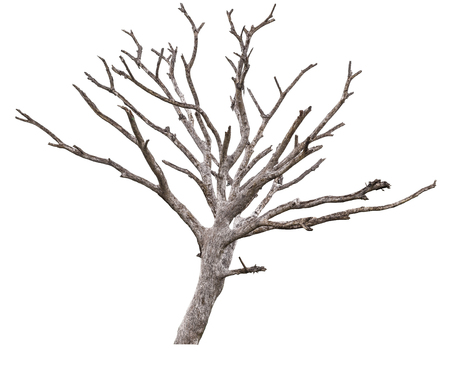 Dead tree isolated on white backgrounds. Stock Photo
