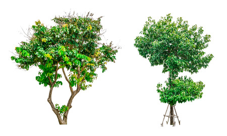 shrubbery: Collection of green trees isolated on white background for use in architectural design or decoration work.