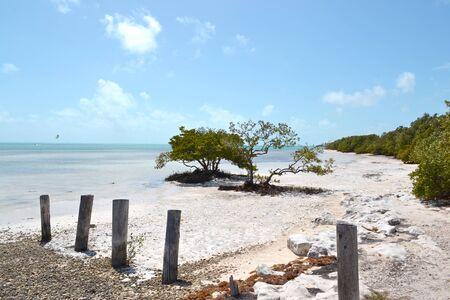 buttonwood tree on the beach. Los Callos, Miami