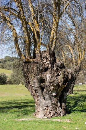 Tree trunk, whimsical forms of nature Foto de archivo
