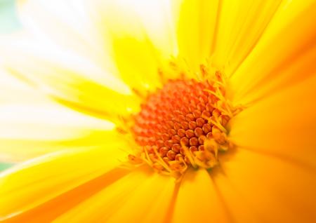 on yellow daisy: Macro of a yellow daisy Stock Photo
