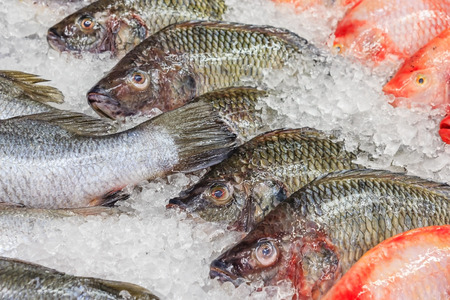 Frozen Nile Tilapia Fish in a Pile of Ice at supermarket, Mixed fish for sale on a market Background with fresh fish with ice hake Stock Photo