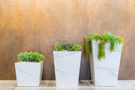 갈색 박격포 벽 배경 앞의 사각형 대리석 냄비에 녹색 식물, 상단 공간에 복사 공간 스톡 콘텐츠
