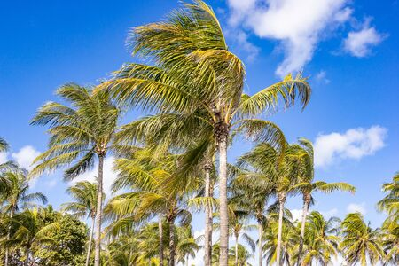 Coconut trees, palm trees at tropical coast on beach with sky background. Archivio Fotografico - 129295431