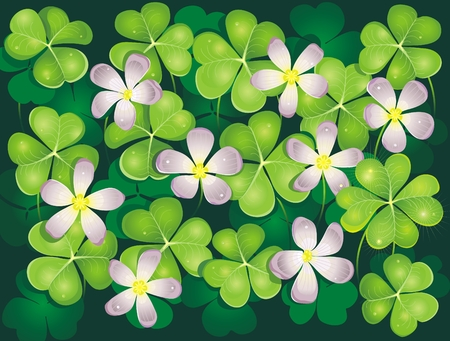 Field of blooming clovers. Background.