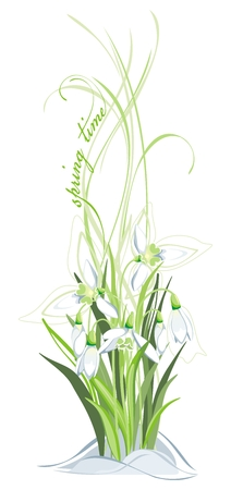 Bunch of snowdrops on the white background Vector