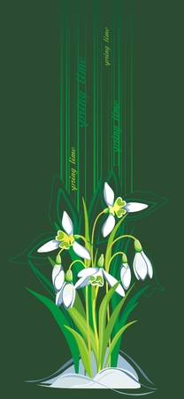 early spring: Blooming Snowdrops on green background Illustration