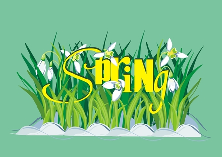 Spring Background with Snowdrops and text Vector