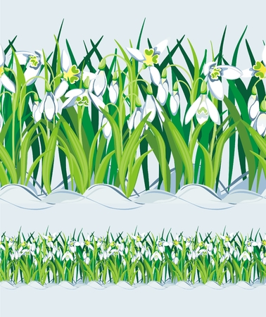 early spring: Field of Snowdrops. Seamless.
