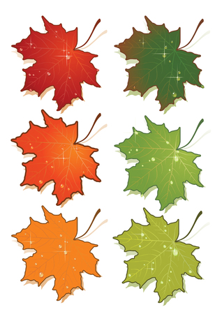 autumnal: Vector illustration of maples leafs set.