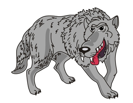 Gray Wolf on a white background