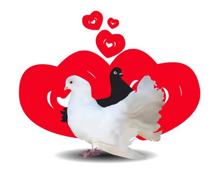 illustration and painting: White and black dove on a background of red hearts Illustration