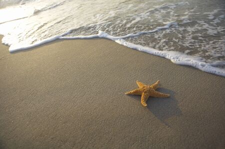 a seastar is lying on the beach Stock Photo