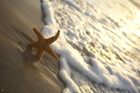seastar: a seastar is lying on the beach Stock Photo