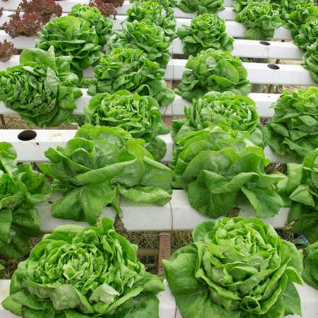 plot: vegetable plot Stock Photo