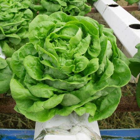 and plot: vegetable plot Stock Photo
