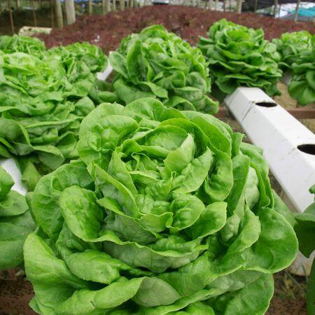 vegetable plot Stock Photo