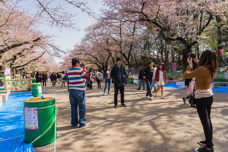 Tokyo, Japan - March 31, 2018: Visitors enjoy Cherry Blossom in Ueno Park Tokyo, Japan in Sakura Festival