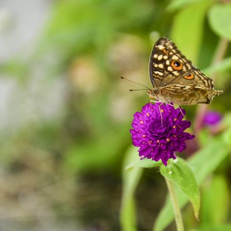 giant sunflower: Butterfly & Flower Stock Photo