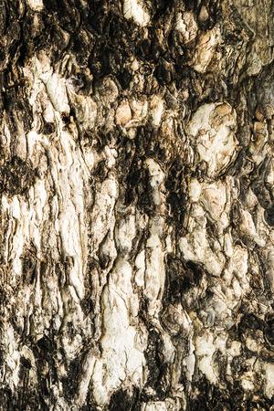 Patterned of tree peel,wood texture