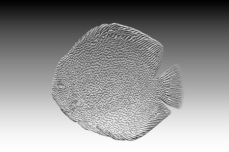 Discus fish on Discus fish red snake skin illustration , relief  arts style , Sculpture